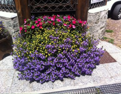 gressoney_granbaita_flowers_5